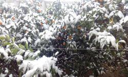 برف پاییزی....درخت های حیاطمون...