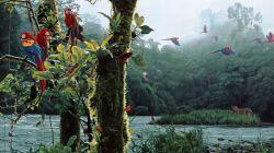 بازی رنگهای مخلوقات زیبا در طبیعتی زیباتر، اثر زیباترین خالق دنیا !!!!!