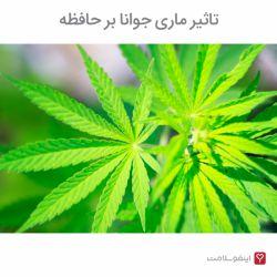 کانابینوئیدها مواد شیمیایی موجود در ماریجوانا و سایر مواد مخدر هستند. کانابینوئیدها میتوانند عملکرد طبیعی مغز را تغییر دهند و تأثیرات منفی جسمیو روانی داشته باشند. یکی از این تأثیرات منفی از دست دادن حافظه است.
