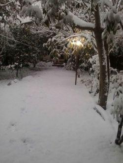 آژیر سفید آمده از دل باغ