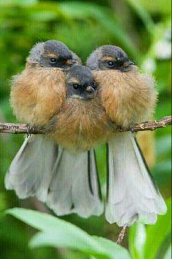 پدرم تاج سرم . مادرم بال و پرم .