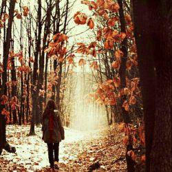 گاهی نفسی هست٬ ولی هم نفسی نیست درهرنفست هم نفست هیچ کسی نیست آنقدرغریبی که دراین شهر درندشت دنیای تو اندازه ی کنج قفسی نیست باید که هوایی به سرت داشته باشی درقلب زمستانی ات امّا هوسی نیست تلخ است که راضی شده باشی به دغل ها شیرین شده باشی و ببینی مگسی نیست...! تنهاییت آنقدر بزرگ است که پیشش خوشبختیت اندازه ی حجمِ عدسی نیست... لــــیلی