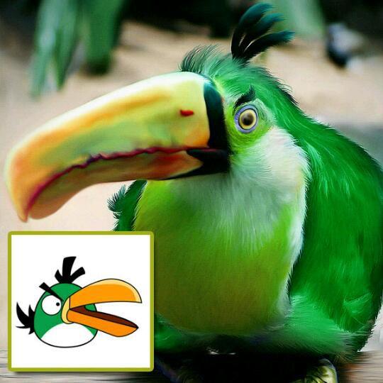 angry birds در واقعیت