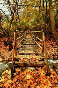 زندگی مثل یه پل قدیمیه!!! به این فکر نکن که اگه. تنها ازش بگذری دیرترخراب میشه  به این فکر کن که اگه!!! افتادی یکی باشه که  دستت رو بگیره