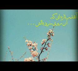 آنقدر تازه ای که   آن روی سرد بالشت ...   #هاشم_نگاشت