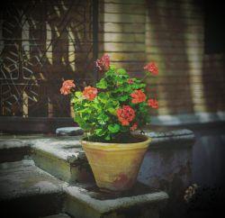من از تمام این دنیا عشق می خواهم و مُشتی شعر گل های شمعدانی پشت پنجره و لبخندهای تو، که تکثیر می کند عشق را به بی نهایت...  #سارا_قبادی