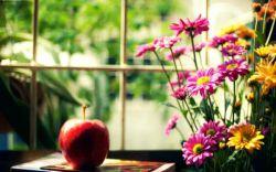 زندگی یک اتاق با دو پنجره نیست زندگی هزاران پنجره دارد یادم هست؛ روزی از پنجره ناامیدی به زندگی نگاه کردم، احساس کردم میخواهم گریه کنم و روزی از پنجره امید به زندگی نگاه کردم، احساس کردم میخواهم دنیا را تغییر دهم، عمر کوتاه ست فرصت نگاه کردن از تمامی پنجرههای زندگی را ندارم … تصمیم گرفتهام فقط از یک پنجره به زندگی نگاه کنم، و آن هم پنجره عشق