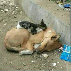 انسانیت  و نداشته هایش !! از حیوانات اموزد