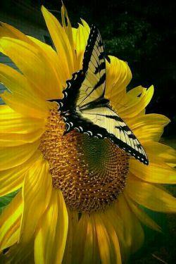 سکوت  همیشه  به معنای  رضایت نیست... گاهی یعنی خسته ام  از اینکه مدام به کسانی  که هیچ اهمیتی برای فهمیدن نمیدهند توضیح دهم! #سیمین_دانشور