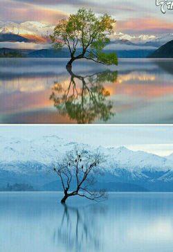 مجموعه ای از زیباترین تاثیر گذاری فصل زمستان برروی مناظر..قبل و بعد از بارش برف.مناظری از نروز،ایسلند،ژاپن ونیویورک