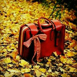 سفر پاییز هم کم کم به اتمام میرسد!  برای آمدنت  برگ ها را دانه دانه شمردم ... خداحافظ پاییز سال 1395 هجری شمسی ...  و حالا نوبت دانه دانه ی باران ها و برف هاست؟!... خیر مقدم به زمستان ...