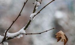 دارد برف می آید در گوش دانه های برف نام تو را زمزمه خواهم کرد تا برف از شوق حضورت بهار را لمس کند.