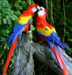 #رنگ#زیبایی#طبیعت#... عشق#.......