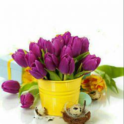 انسانهای خوب همانند گلهای قالی هستند... نه انتظار باران را دارند و نه دلهره ی چیده شدن ... آنها دائمی اند ... سلام و  صبحتون بخیر انسانهای خوب ... هفته ی خوبی داشته باشید...(شنبه 1395/10/4)