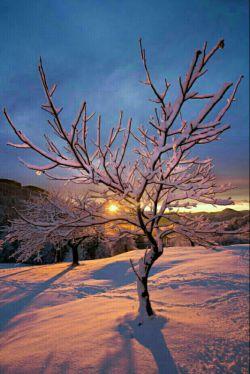 هرچه بابت  نعمت های خداوند   شکرگزار باشی ...   نعمت های  بیشتری به زندگی ات   سرازیر می شود... الحمدلله ... سلام دوستان ... صبحتون زیبا