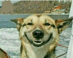 وقتی تو عکس میخندی