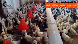 کارگاه تولید گوشت اردک - آبادان تحت نظارت تعاونی مهرخواه صنعت