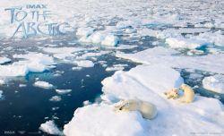 به سمت قطب شمال