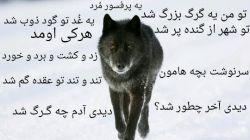 گــرگ_امیر تتلو