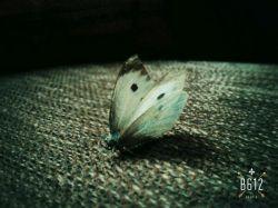 پروانه ای ک از سرما ب خونه ی ما پناه برد از آخرم داداش کوچیکم اونو ب دیار ابدی رهسپار کرد ....