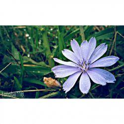 گل نسٖبتی ندارد با رویِ دلفریبت تو در میان گلها،چون گل میان خاری  #سعدی