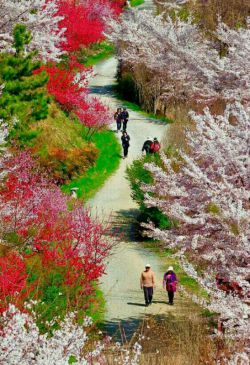 جاده ای زیبا در کره جنوبی