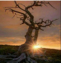 روشن از روی تو چشم و دل روز..... صبح از نام تو دم زد که دمید