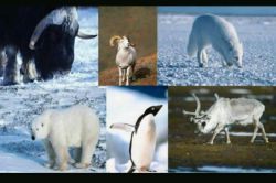 تا حالا فکر کردیم ببینیم چرا حیوانات قطب ها رنگشون سفید هست? ولی همون نوع جانوران در مناطق دیگه به رنگ های دیگه دیده میشن?