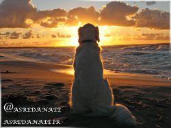شکارچی پرنده سگ جدیدی خریده بود، سگی که ویژگی منحصر به فردی داشت. این سگ میتوانست روی آب راه برود. شکارچی