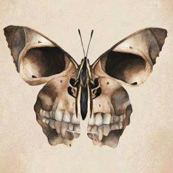 در سکوت، آن که می اندیشد، نجوایِ قلب را می شنود. در اعتماد، آن که درمان می کند، شفا می دهد. در مقامِ ایمان، سنگ به پروانه تبدیل می شود.  راشل_ریمن