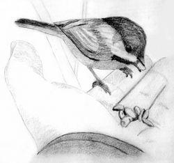 گلوله نمی دانست..تفنــگ نمی دانست..  شکارچی نمیدانست..  پرنده داشت برای جوجه هایش غذا می برد..!  خــدا که می دانست! نمی دانست؟!!
