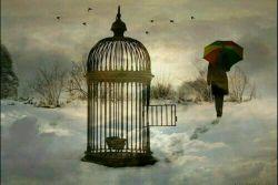 """پرنده ای که  پرواز بلد نیست  به """" قفس """" می گوید  """" تقدیر """""""