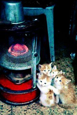 زمستون فقط برای ما سرما نداره مراقب اونا هم باشیم