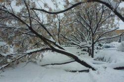 مشهد برف اومده خداروشکر... ولی حیف که درختا عادت ندارن به این سنگینی
