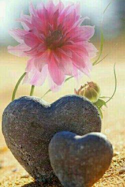 به آدمهایی که از خوشحالی  شما شاد میشوند و از ناراحتی شما غمگین ،  توجه خاص داشته باشید . آنها کسانی اند که سزاوار جایگاهی ویژه  در قلب شما هستند..سلام دوستان عزیز ، صبحتون با طراوت