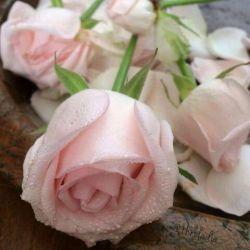 سلام دوستان عزیزم...عصرتون بخیر....امیدوارم همیشه شادوپیروز باشید...