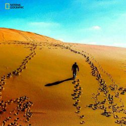 National Geographic: خراسان - طبسื