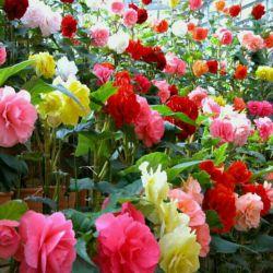 سلاااام به همه دوستان عزیزم روزتون بخیر و خوشی ..این گلای زیبا رو تقدیم میکنم به تموم دوستان خوب لنزورم  ممنونم از اینکه به یادم بودین ممنون بابت تگ  و  شرمنده از اینکه نتونستم جواب محبتهای دوستان رو بدم