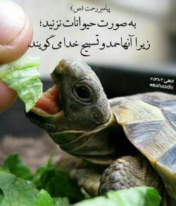 حیوانات موجودات زبان بسته خدا هستند  آزاری به آنها نرسانیم....