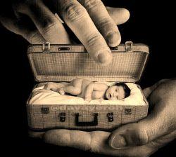 همچون یک بذر زاده شده و به دنیا  آمده ای می توانی همان بذر بمانی  و بمیری ، اما می توانی گل باشی و بشکفی، می توانی ،درخت باشی و ببالی...  سلام شب شما مملو شادی
