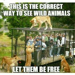 این روش صحیح دیدن حیوانات وحشیه. بذاریدشون آزاد باشن #حیوانات #انگلیسی #english #English