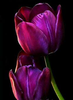 خدایا در روزهای آخر سال ب حق نامهای زیبایت ب حق مهربانیات ب حق بزرگی وجلالت غم وغصه رااز دل دوستان وعزیزانم دورکن وبهترینهارا برایشان مقدرفرما