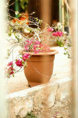 دو قــدم  مـانده به خندیدنِ برگ یڪ نفس مـانده به ذوق گل سرخ چشم در چشم بهاری دیگر یڪ سبد عاطفه دارم همـه ارزانی تان