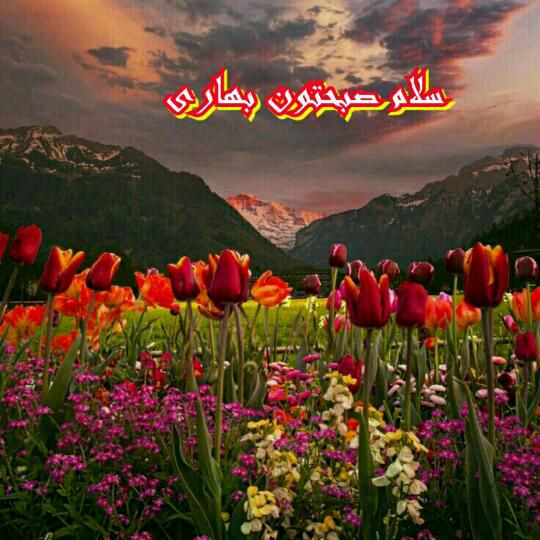 ﷽ الهے صبح را آفریدے وما را خلقتے دوبارہ بخشیدے خلقت دوبارہ ے تورا دراین صبح معنوے شاڪریم  خدایا شڪرت الهے بہ امید و یارے تو ﷽  صبحتون بخیر و شادی