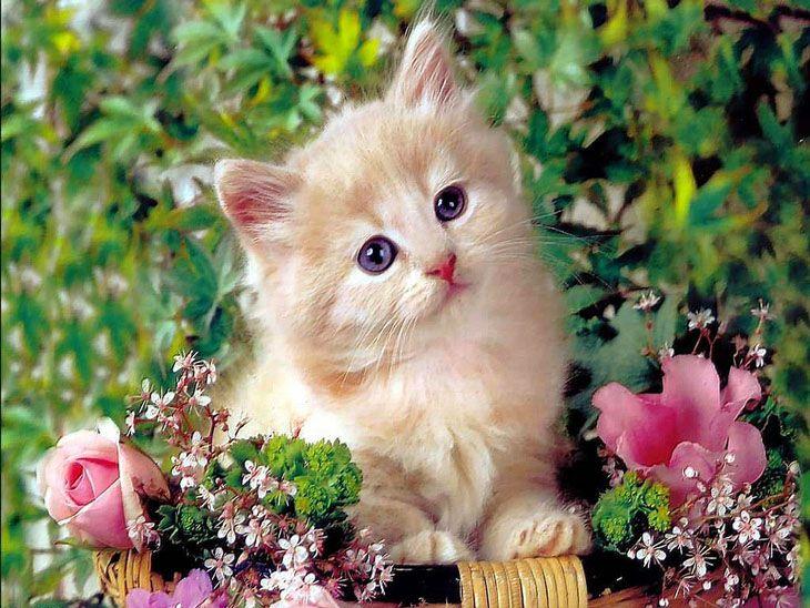 زندگی من.... مثل بچه گربه ای است که مظلومانه نگاهت میکند تا بلکه... لحظه ای اغوش گرمت را..  به او هدیه کنی....
