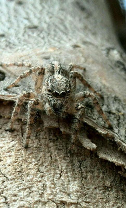 همین الان این عکس روگرفتم واقعا این عنکبوت ها قشنگن اسمشون عنکبوت گرگیه