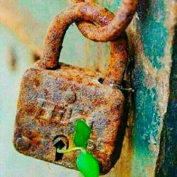 دشمنانمان  می توانند همه ی گل ها را بچینند ولی هرگــــــــــز  نخواهند توانست بر بهــــــار  چیره شوند...