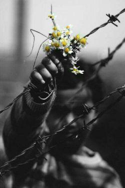 اگر نتوان آزادی و عدالت را یکجا داشت!!! ومن مجبور باشم  میان این دو یکی را انتخاب کنم○  آزادی را انتخاب می کنم، تا بتوانم به بیعدالتی اعتراض کنم●
