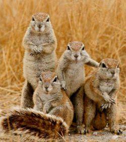 سلفی با دوستانشون
