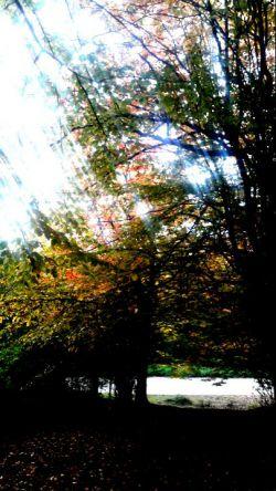 پاییز.بزچفت.بابل.95
